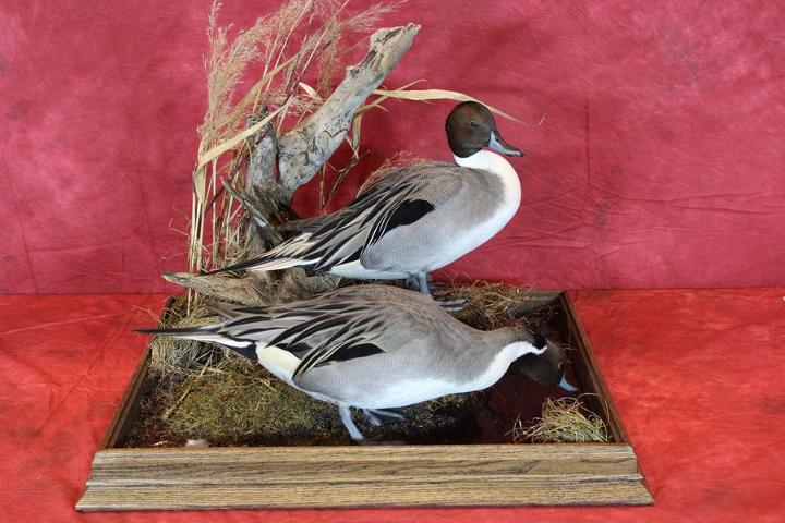 Nate Miller - Judge's Choice Best of Show, State Champion Waterfowl, & Master's Competitor's Award