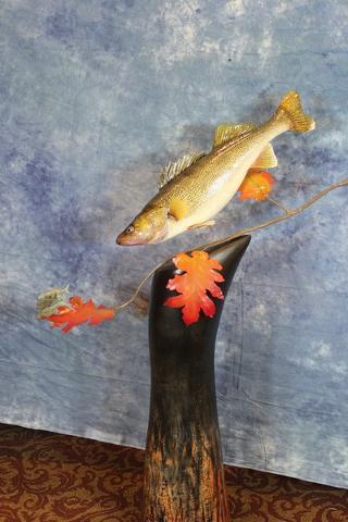 Tyler Erickson - Best Out of State Mount, State Champion Pedestal Fish, McKenzie's Taxidermist Choice for Best Fish, & Best Warm Water Fish