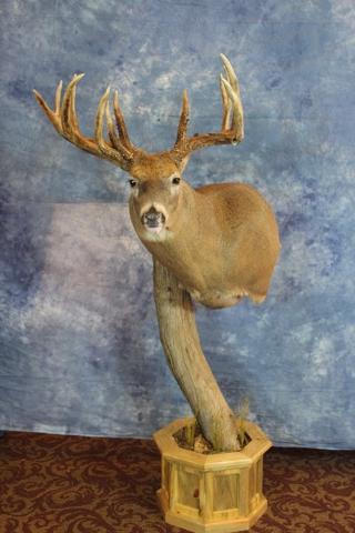 Tim Hidde - Best Professional Whitetail Deer Head