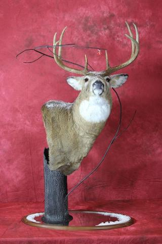 Brad Graber - Professional Competitor's Award sponsored by Matuska Taxidermy Supply