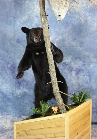 Brad Graber & Scott Miller - Terry Apel Bear Award sponsored by Terry Reed