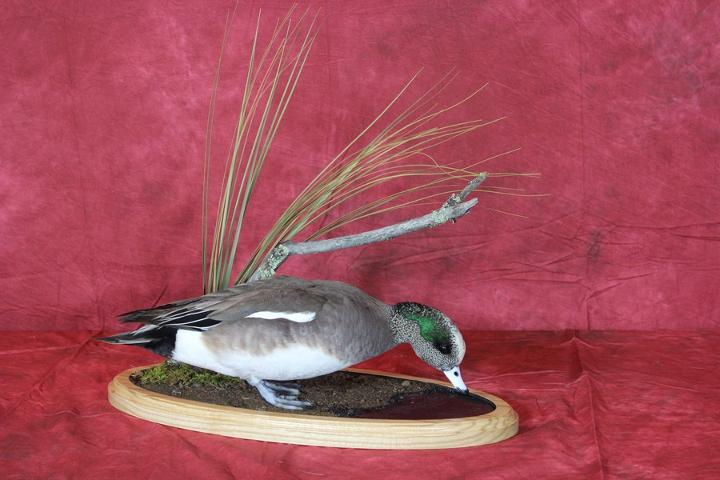 Professional Competitor's Award sponsored by Matuska Taxidermy Supply