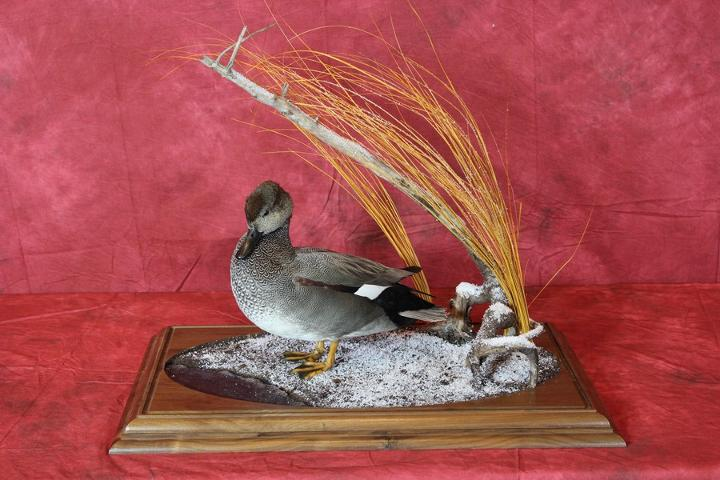 Brad Graber - Professional Competitor's Award sponsored by Matuska Taxidermy Supply & Best Professional Waterfowl