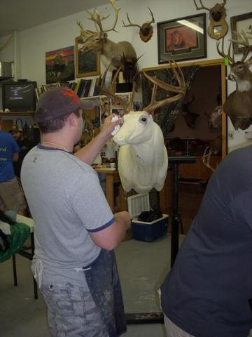 Garrett Sunram working on a whitetail.