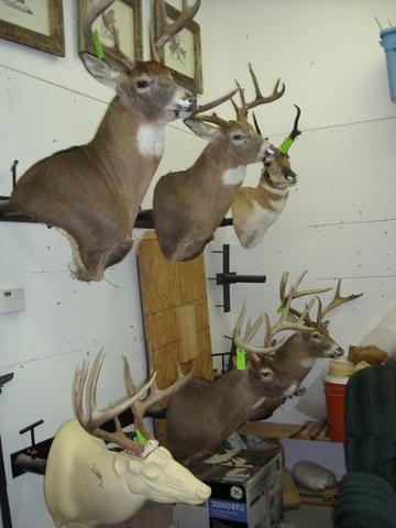 Customer mounts at Shawn's shop.