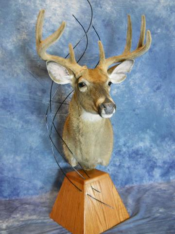 State Champion Whitetail, Mckenzie's Taxidermist Choice Best Whitetail, and Best Whitetail