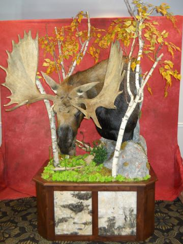 DNR Choice, Taxidermist Choice Best Gamehead, Most Original and Creative Presentation Sponsored by VanDykes