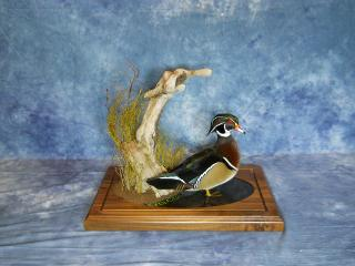 Masters Competitor's Award  Sponsored by Matuska Taxidermy Supply