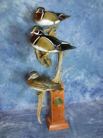 WASCO Award, Masters Competitor's Award Sponsored by Matuska Taxidermy Supply, McKenzie's Taxidermist Choice Best Bird