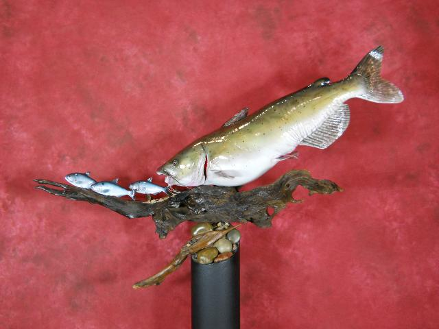 McKenzie's Taxidermist Choice Best Fish