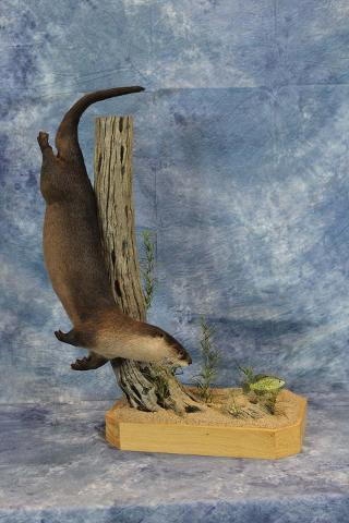 Curt Markgraff Otter - Best Professional Small Mammal