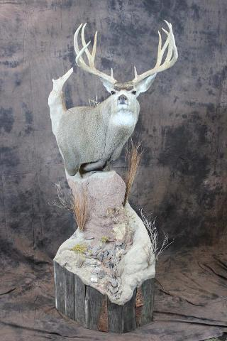 Larry O'Malley Mule Deer - Taxidermist's Choice Best Gamehead