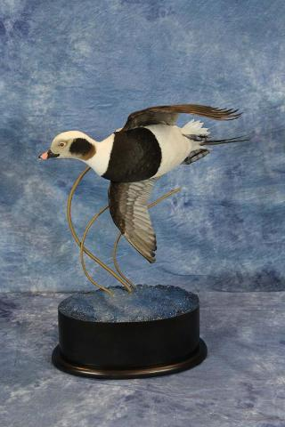Matt Tainter Old Squaw - Masters Competitor's Award Sponsored by Matuska Taxidermy Supply