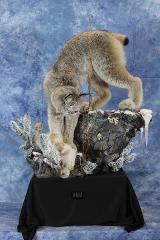 Lynx - Celebrity's Choice