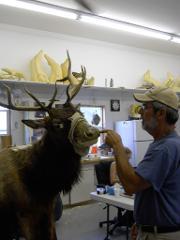 Hide Paste Elk