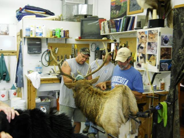 Elk Assembly