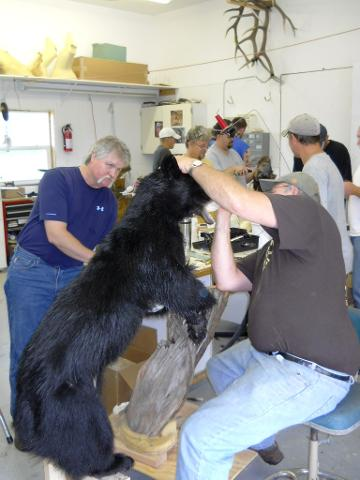 Bear coming together