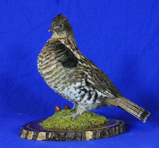 Best Professional Upland Game Bird - Marty Wiley Ruffed Grouse