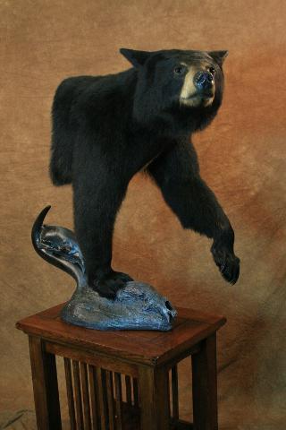 Best Professional Gamehead, Terry Apel Award - Royce Larson Black Bear