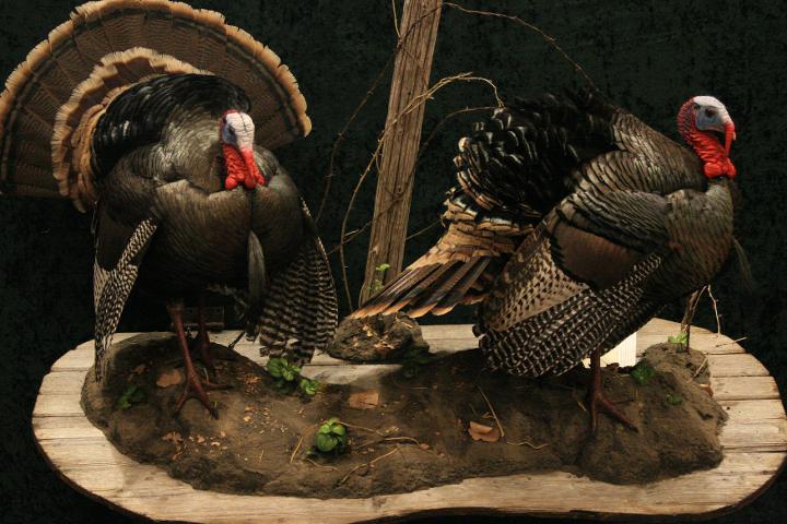 Collective Artist - Jim Slocum & Jeff Elich - Turkeys
