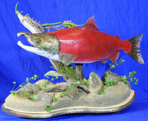 Star Fish Award - Shawn Bakken Sockeye Salmon
