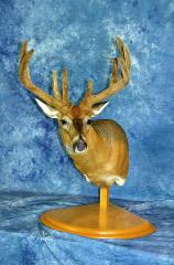 Masters Entry: Whitetail by Brad Nelson