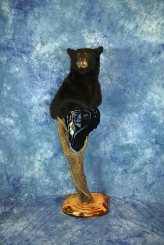 Professional Entry: Black Bear Gamehead by Brad Graber