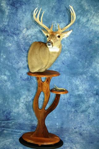 Taxidermists Choice Best Whitetail - Mount by Scott Verhunce