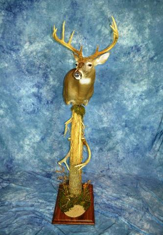 Masters Whitetail by Troy Pleuss