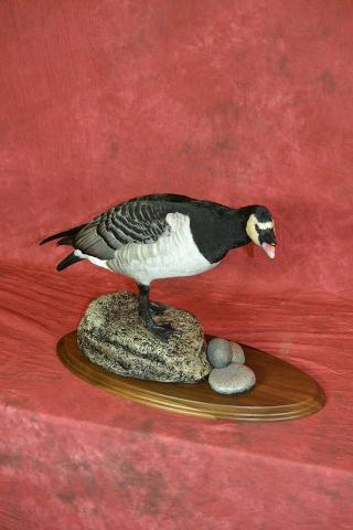 Professional Barnacle Goose by Brad Graber