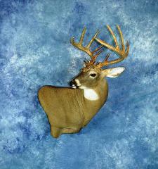 Whitetail deer by Joshua Sykora