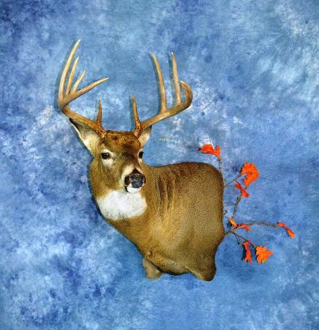 Professional Entry: Whitetail by Bruce Norton