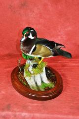 Novice Entry: Wood duck by Jeremiah Denzer