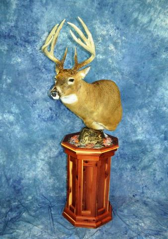 Whitetail by Bruce Norton