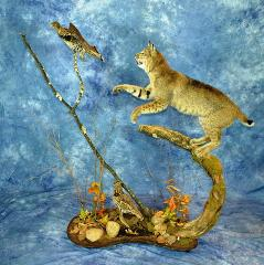 Mayor's Choice Award, Bobcat by Marty Wiley