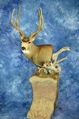 Woody Award, State Champion Gamehead, Best Gamehead Plaque . Mule Deer by Larry O'Malley
