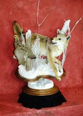 Coyote by Anthony Koziolek
