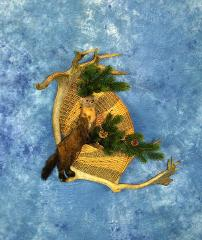 Novice Entry: Pine Marten by Derrick Klocke