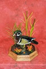 Professional Competitor's Award. Wood Duck by Aaron Reiling.
