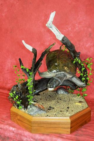 Best Reptile, Bluff Country Award. Snapping Turtle by Scott Miller