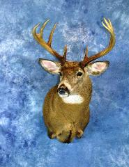 Professional Entry: Whitetail by Royce Larson