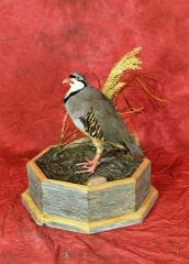 Professional Entry: Chukar by Paul Martinetto