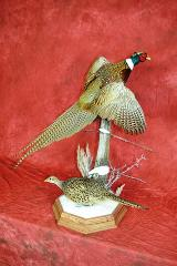 Professional Competitor's Award. Pheasants by Aaron Reiling