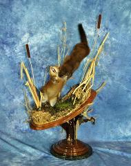 Ladies Choice, Bluff Country Woodworks - Muskrat by Scott Vohnoutka