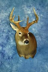 Masters Entry: Whitetail by Larry O'Malley