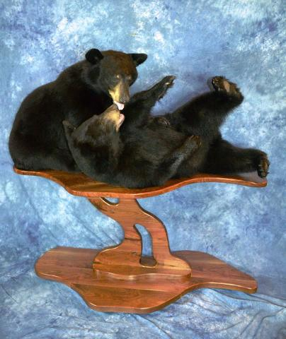State Champion Large Mammal, Best Large Mammal, Terry Apel Award, Best Out Of State Entry. Black Bears by David Schmidt