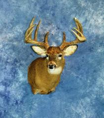 Novice Entry: Whitetail by Derrick Klocke