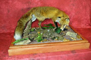 Professional Entry: Red Fox by Mike Bashaw