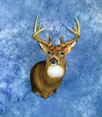 Professional Entry: Whitetail deer by Mark Mayer