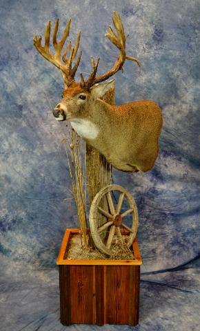 Best professional Whitetail by Bruce Norton